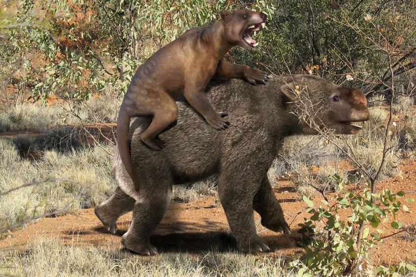 Thylacoleo_vs_Diprotodon