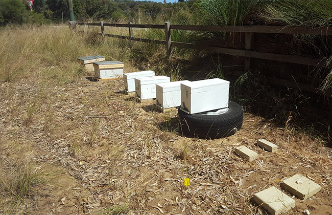 bee-hives