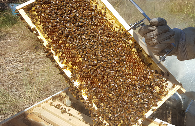 bees-slate-2