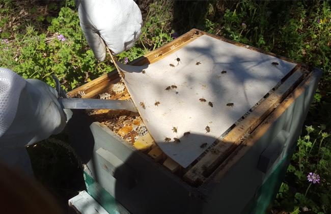 hive-slip