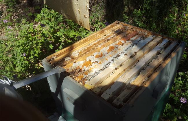hive-slip1