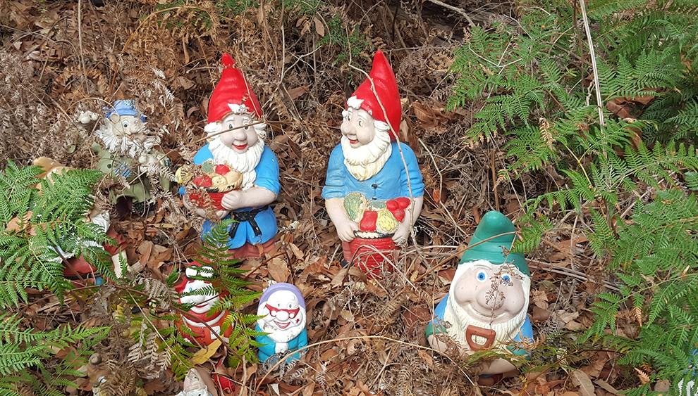 gnome-26