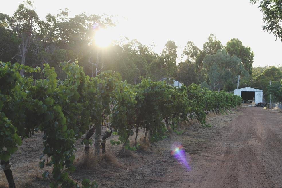 Margaret river vintners