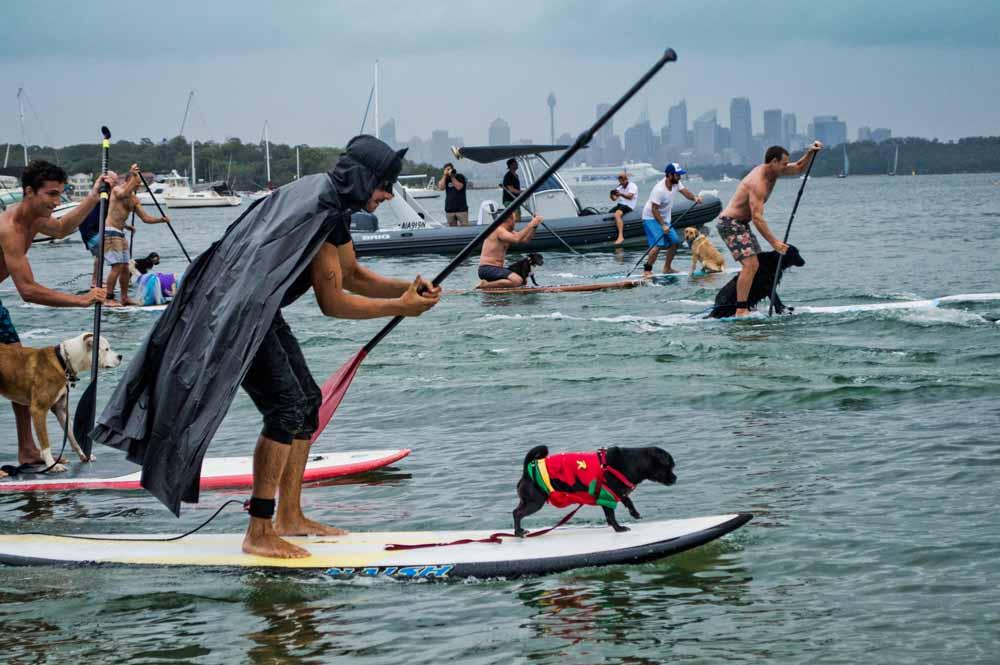 Dog Canoe Rescue